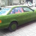 Buga-Audi 2