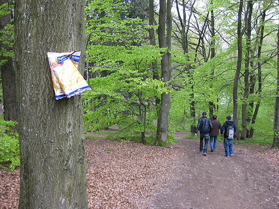 Nürburgring Nordschleife im Wald